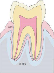 歯と歯肉27110500027